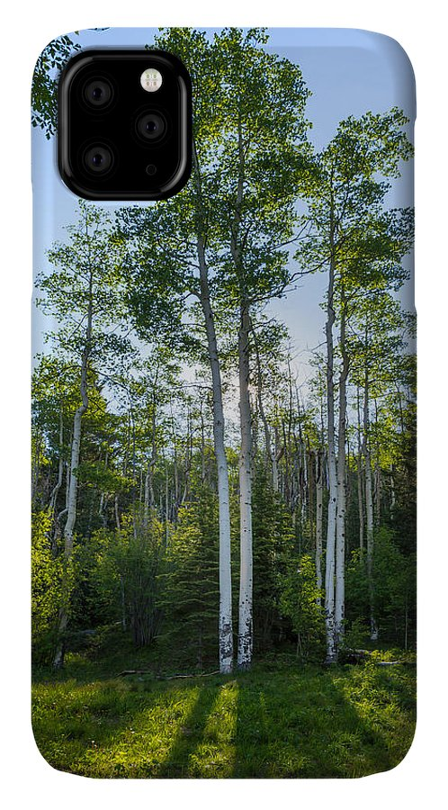 Aspen IPhone 11 Case featuring the photograph Aspens At Sunrise 1 - Santa Fe New Mexico by Brian Harig