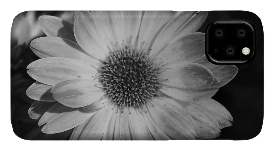 Black And White IPhone Case featuring the photograph Awaiting A Mate by Jennifer Gillis