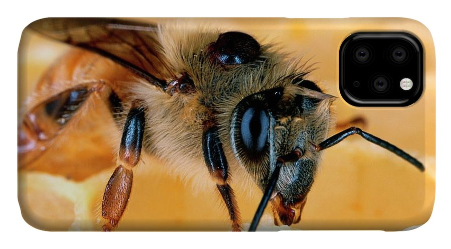 Animal IPhone Case featuring the photograph Bee With Varroa Mite On Its Back by Scott Bauer/us Department Of Agriculture/science Photo Library