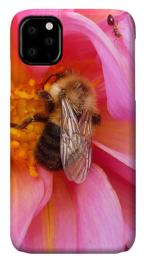 Flower IPhone Case featuring the photograph Billy B Dahlia and company by Lingfai Leung