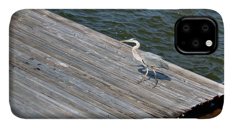 Photograph IPhone 11 Case featuring the photograph Blue Heron On Dock by Marian Bell