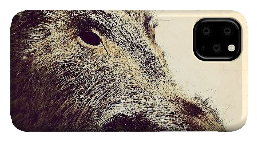 Love IPhone 11 Case featuring the photograph Boar! by Emanuela Carratoni