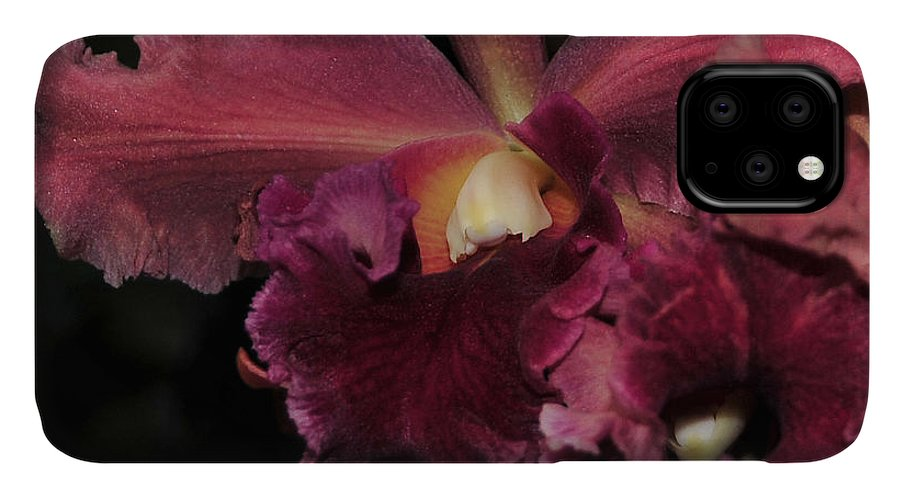 Orchid IPhone Case featuring the photograph Brassolaeliocattleya Helen Huntington Chevy Chase by Terri Winkler