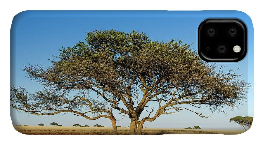 Acacia IPhone Case featuring the photograph Camel Thorn Acacia Tree In The Kalahari by Peter Chadwick