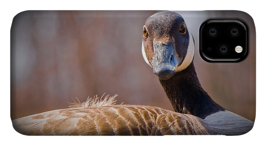 Animal IPhone Case featuring the photograph Canadian Goose by Bob Mintie