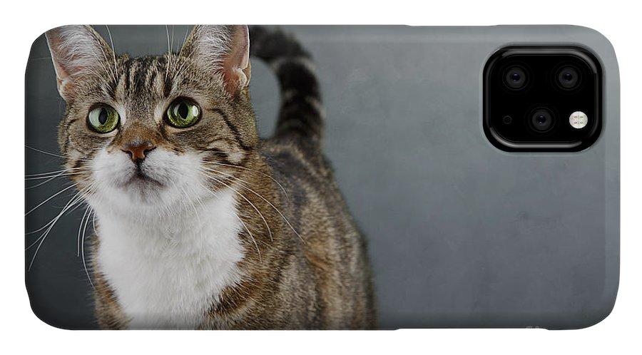 Cat IPhone Case featuring the photograph Cat Portrait by Nailia Schwarz