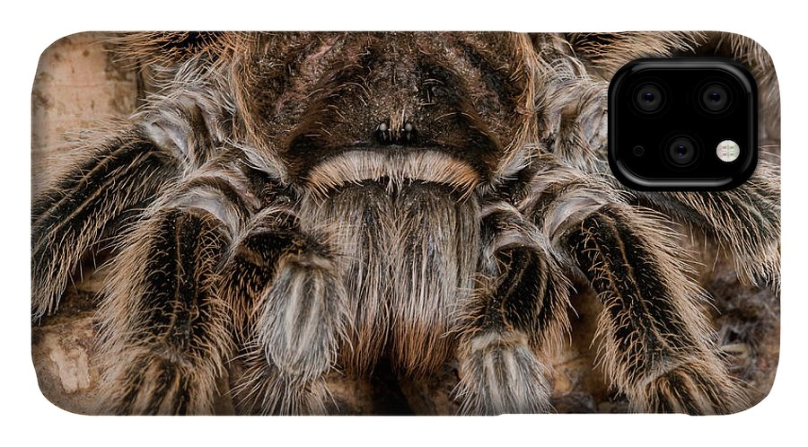 Arachnid IPhone Case featuring the photograph Chilean Rose Tarantula Close-up by Nigel Downer