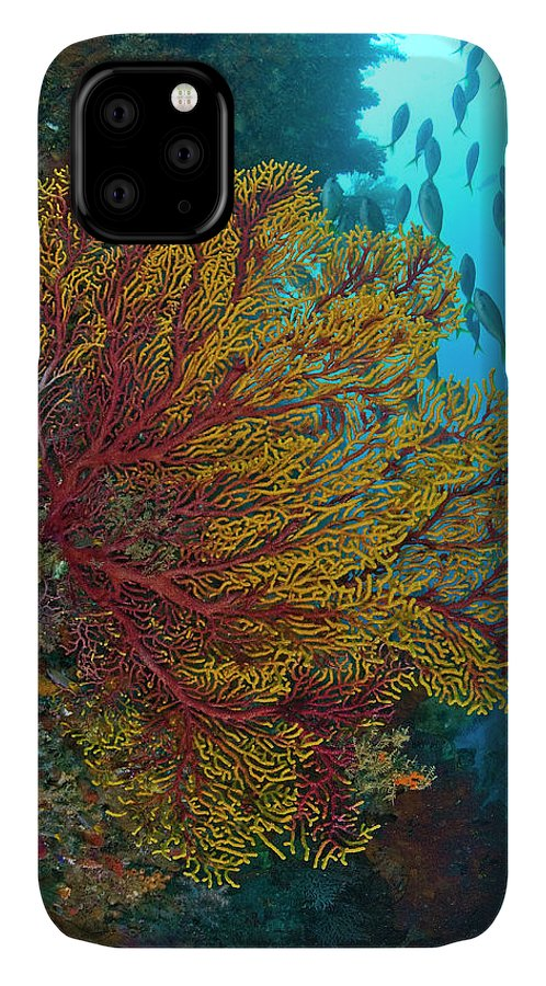 Animals In The Wild IPhone Case featuring the photograph Colorful Sea Fan Or Gorgonian Coral by Jaynes Gallery