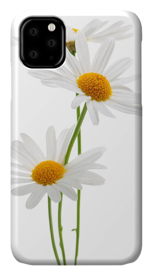 Daisy IPhone 11 Case featuring the photograph Daisies On White Background by Elena Elisseeva