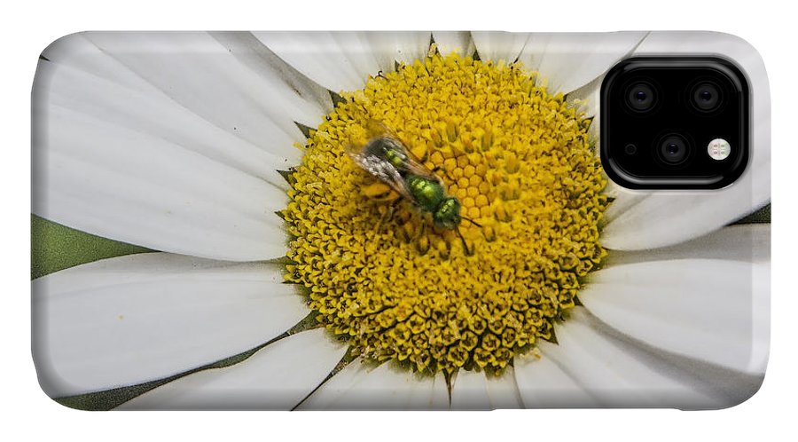Daisy IPhone Case featuring the digital art Daisy Bug by Photographic Art by Russel Ray Photos
