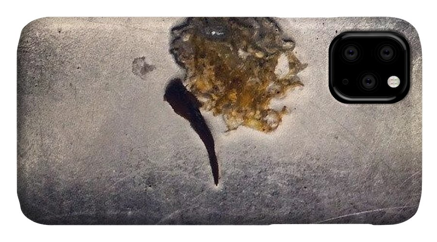 Dragonfly IPhone 11 Case featuring the photograph Dragonfly In The Sink by Genevieve Esson