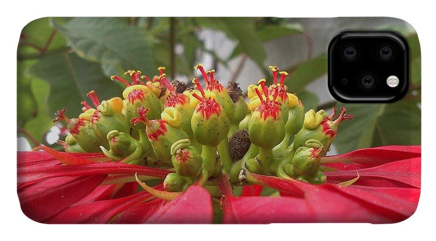 Euphorbia Pulcherrima IPhone Case featuring the photograph Euphorbia Pulcherrima by Venkatesh B