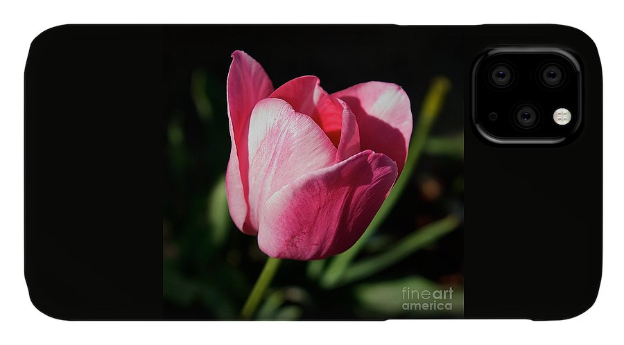 Faith IPhone Case featuring the photograph Threshold - Faith In The Light Of Dawn by Frank J Casella