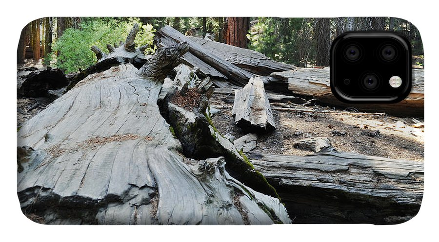 Sequoia National Park IPhone Case featuring the photograph Fallen Sequoia Trail Of 100 Giants II by Kyle Hanson