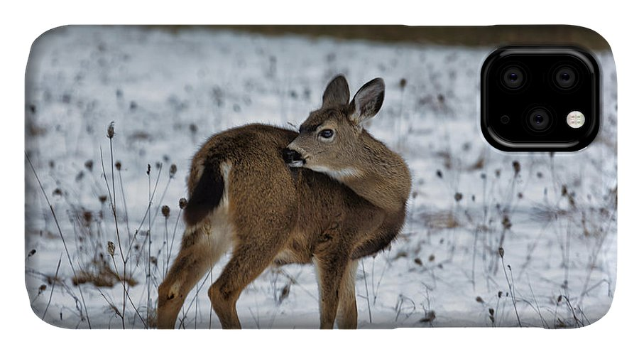 Fawn IPhone 11 Case featuring the photograph First Winter by Belinda Greb
