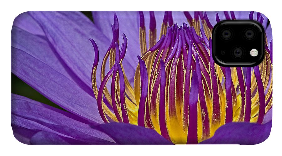 Waterlily IPhone 11 Case featuring the photograph Flaming Heart by Susan Candelario