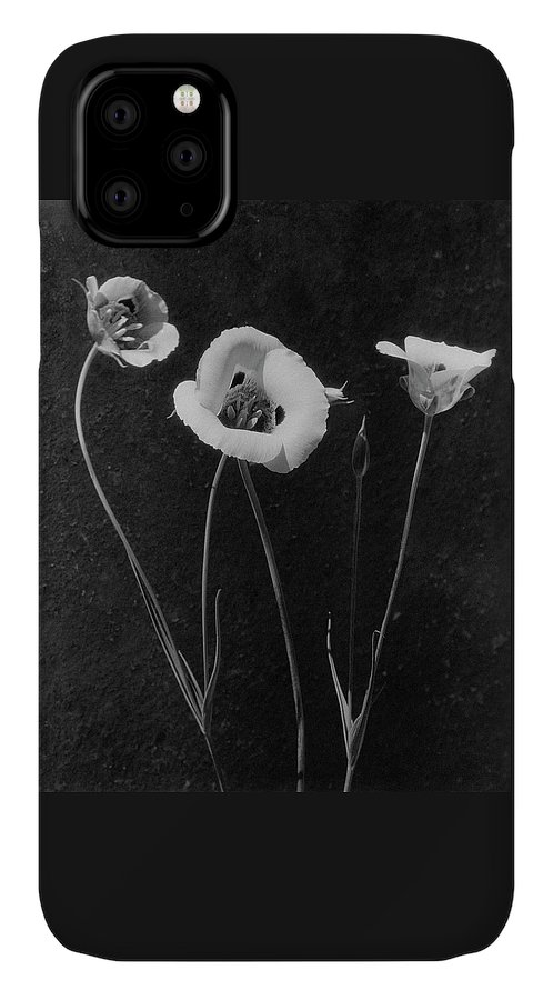 Exterior IPhone 11 Case featuring the photograph Flowers In Louise Beebe Wilder's Garden by Harry G. Healy