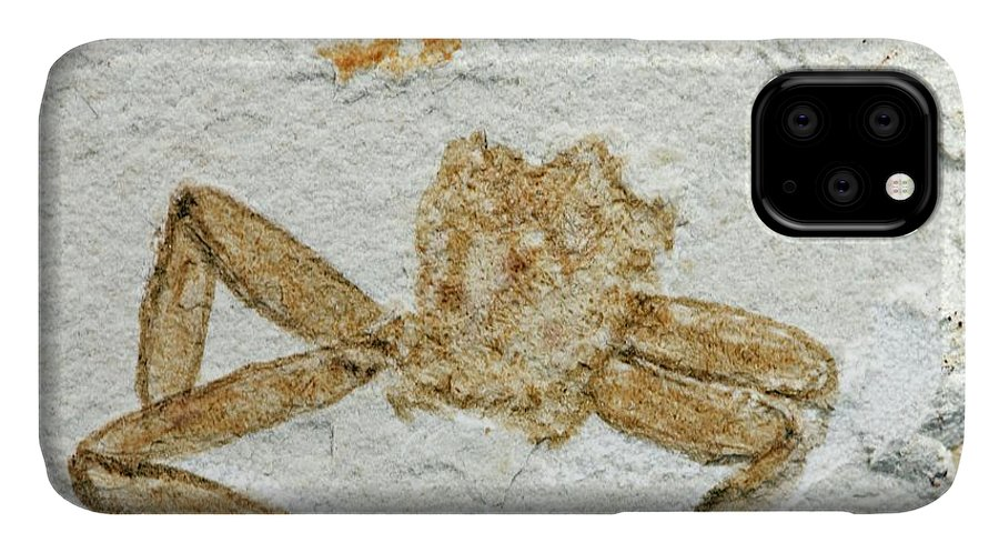Animal IPhone Case featuring the photograph Fossil Arachnid by Pascal Goetgheluck/science Photo Library