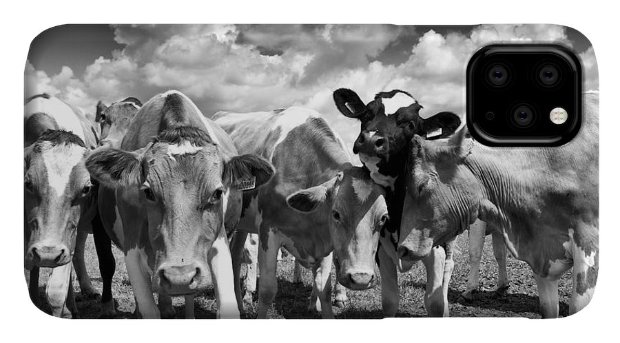 Calf IPhone 11 Case featuring the photograph Friendly Cows by Tim Gainey