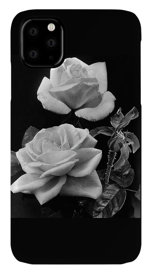 Flowers IPhone Case featuring the photograph 'george Arends' Roses by J. Horace McFarland