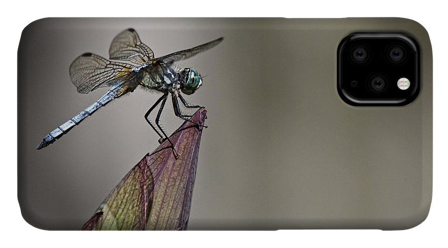Get A Grip IPhone Case featuring the photograph Get A Grip by Wes and Dotty Weber