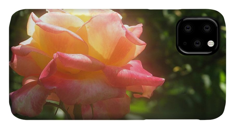 Rose IPhone Case featuring the photograph Glowing Rose by Tammie Miller