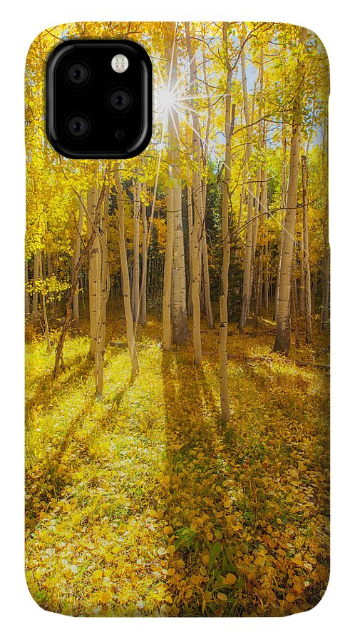 Aspens IPhone 11 Case featuring the photograph Golden by Darren White
