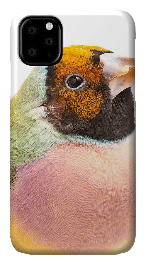 Animal IPhone Case featuring the photograph Gouldian Finch Erythrura Gouldiae by David Kenny