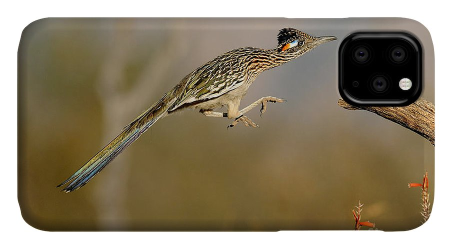 Animal IPhone 11 Case featuring the photograph Greater Roadrunner Leaping by Scott Linstead