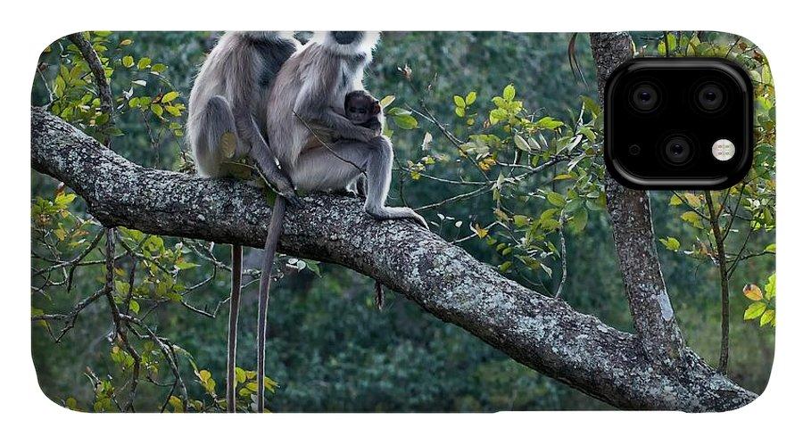 Animal IPhone Case featuring the photograph Grey Langur Monkeys by K Jayaram