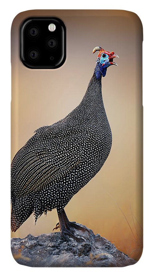 Helmeted IPhone 11 Case featuring the photograph Helmeted Guinea-fowl Perched On A Rock by Johan Swanepoel