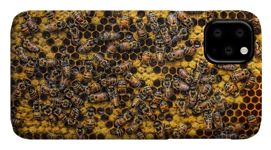 Honeycomb IPhone Case featuring the photograph Honey Bee Colony - Beekeeper by Lee Dos Santos