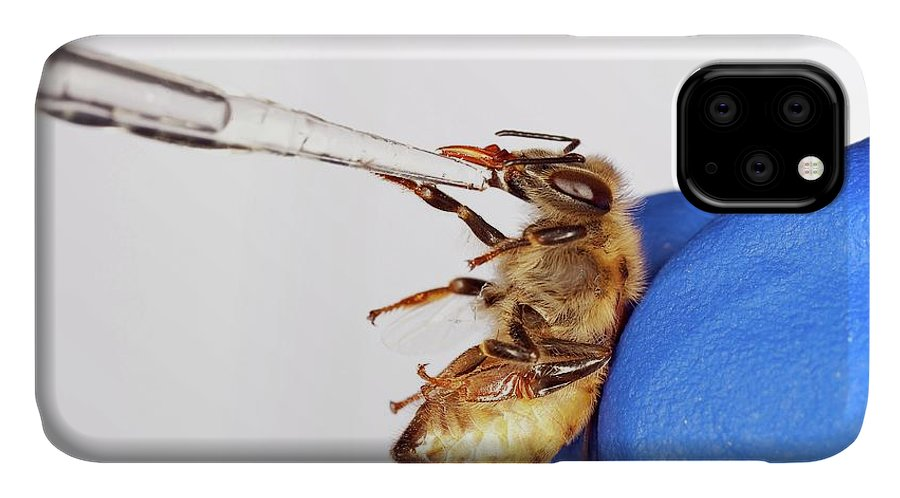 Honey Bee IPhone Case featuring the photograph Honey Bee Inoculation by Stephen Ausmus/us Department Of Agriculture