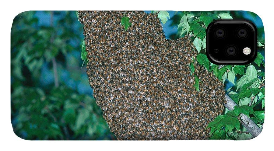 Fauna IPhone Case featuring the photograph Honey Bee by Millard H. Sharp