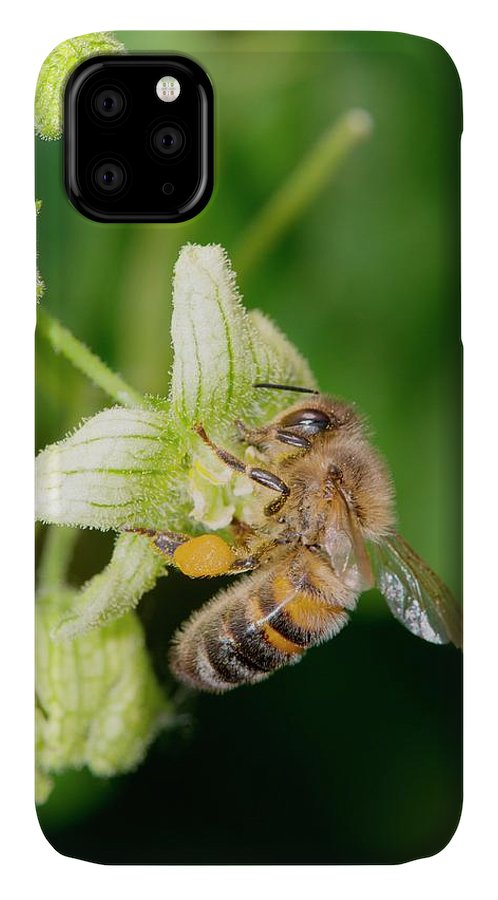 1 IPhone Case featuring the photograph Honey Bee On White Bryony by Dr. John Brackenbury