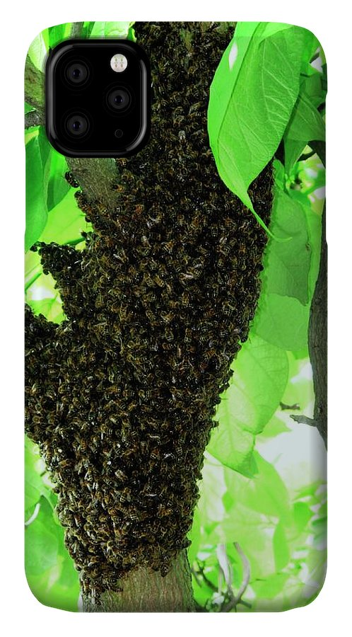 Catalpa Bignonioides IPhone Case featuring the photograph Honey Bee Swarm by Cordelia Molloy/science Photo Library
