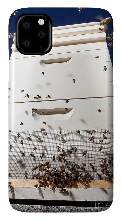 Beehive IPhone Case featuring the photograph Honey Bees and Beehive by Cindy Singleton