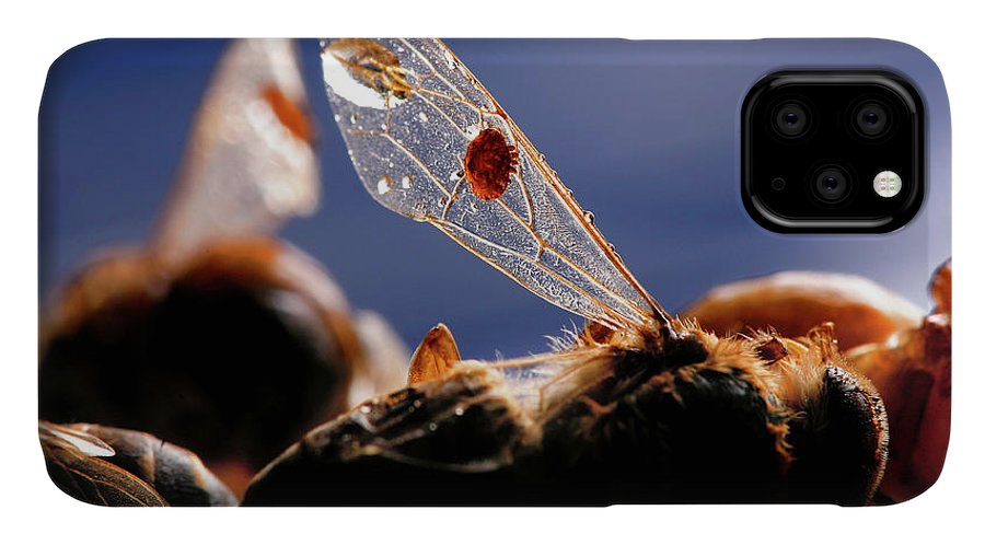 Bee IPhone Case featuring the photograph Honeybee Inflicted With Varroa Mite by Coke Whitworth