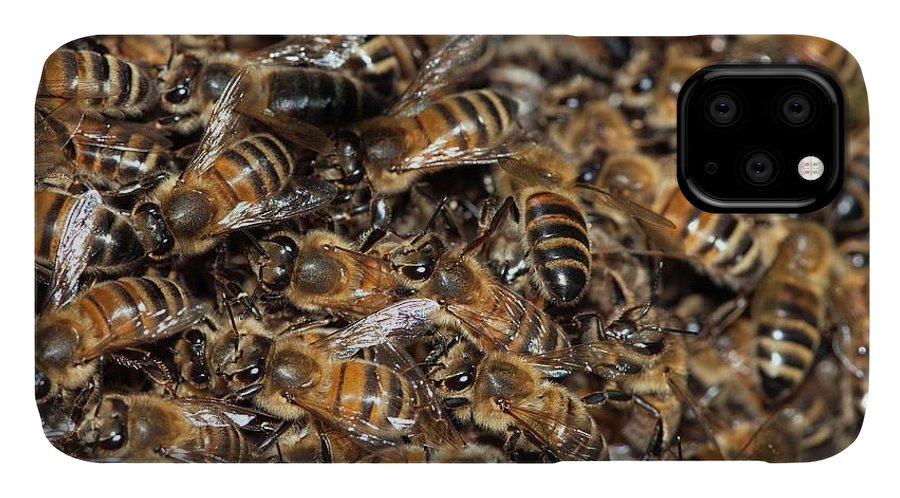 Animal IPhone Case featuring the photograph Honeybee Swarm by Dr. John Brackenbury/science Photo Library