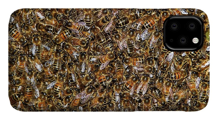 Animal IPhone Case featuring the photograph Honeybee Swarm by Linda Wright/science Photo Library