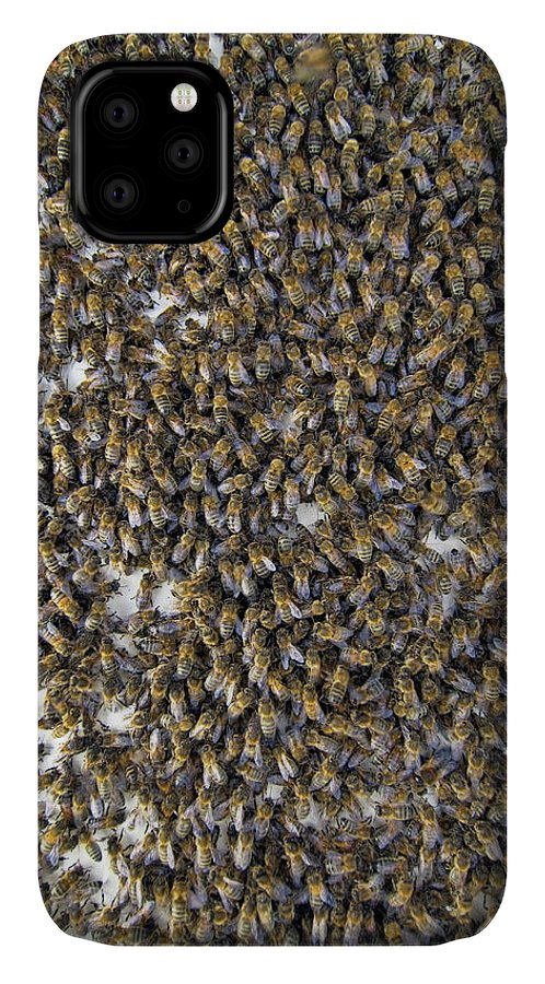 Apis Mellifera IPhone Case featuring the photograph Honeybee Swarm by Simon Fraser/science Photo Library