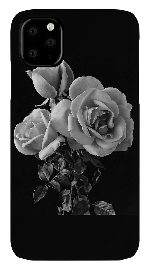 Plants IPhone 11 Case featuring the photograph Hybrid Tea California Roses by Edwin T. Merchant