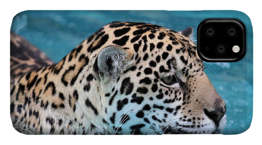 Jaguar IPhone Case featuring the photograph Jaguars Love to Swim by Sabrina L Ryan