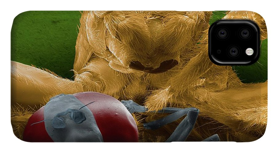 Salticidae IPhone Case featuring the photograph Jumping Spider Catching Prey by Thierry Berrod, Mona Lisa Production