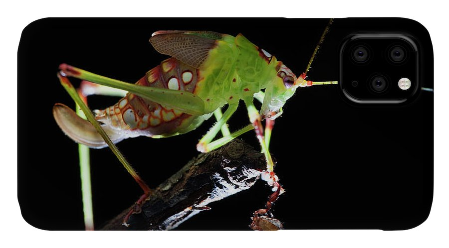 Animal IPhone Case featuring the photograph Katydid With Pseudoscorpion by Melvyn Yeo