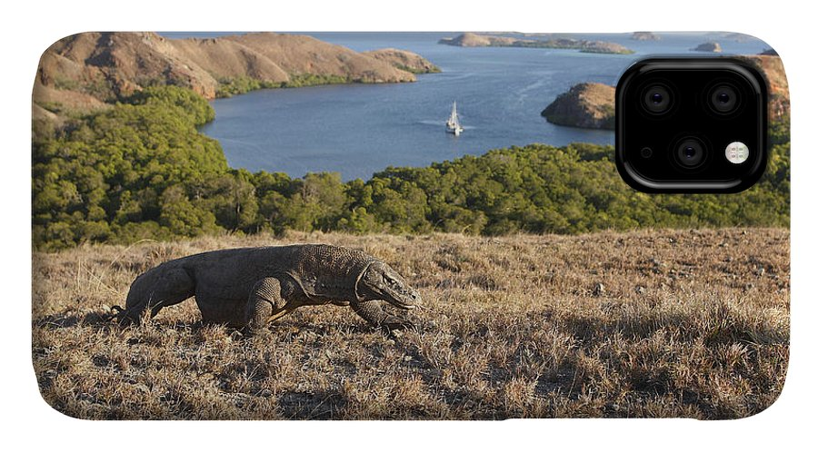 Komodo Dragon IPhone Case featuring the photograph Komodo National Park by M. Watson
