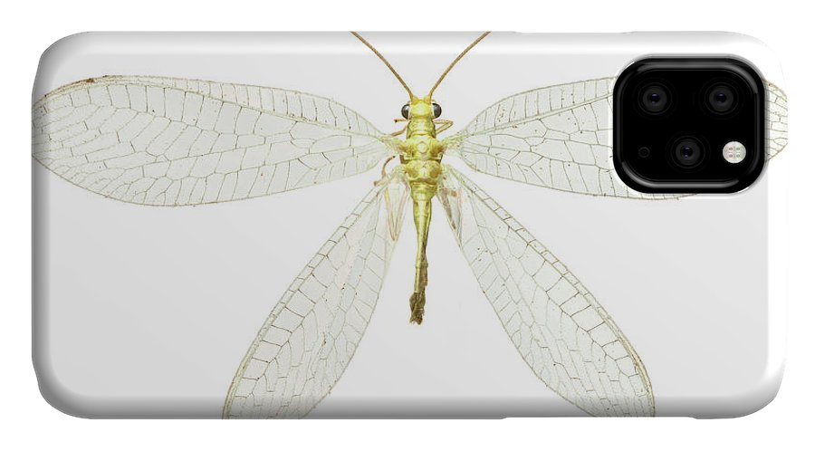 Animal IPhone Case featuring the photograph Lacewing by Natural History Museum, London