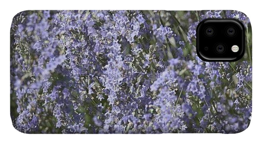 Beautiful IPhone 11 Case featuring the photograph #lavender by Georgia Fowler