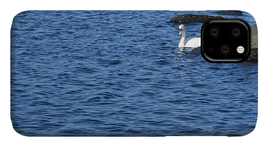 Swan IPhone Case featuring the photograph Lone Swan by Tammie Miller
