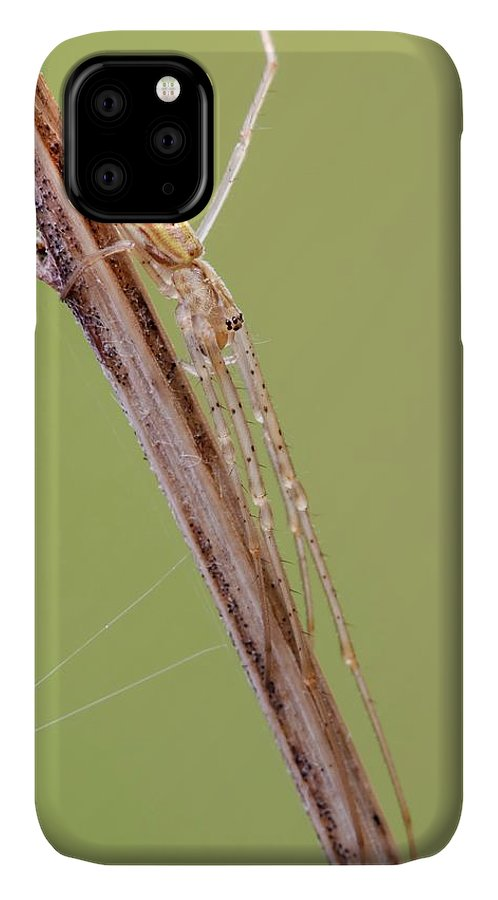 April IPhone Case featuring the photograph Long Jawed Spider by Heath Mcdonald